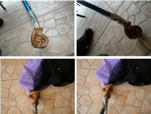 snake removal from kitchen in Orlando