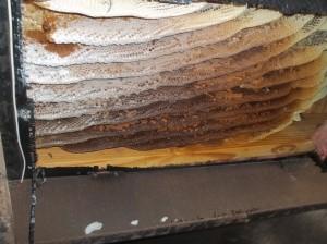 Orlando Bee Hive Under Trailer