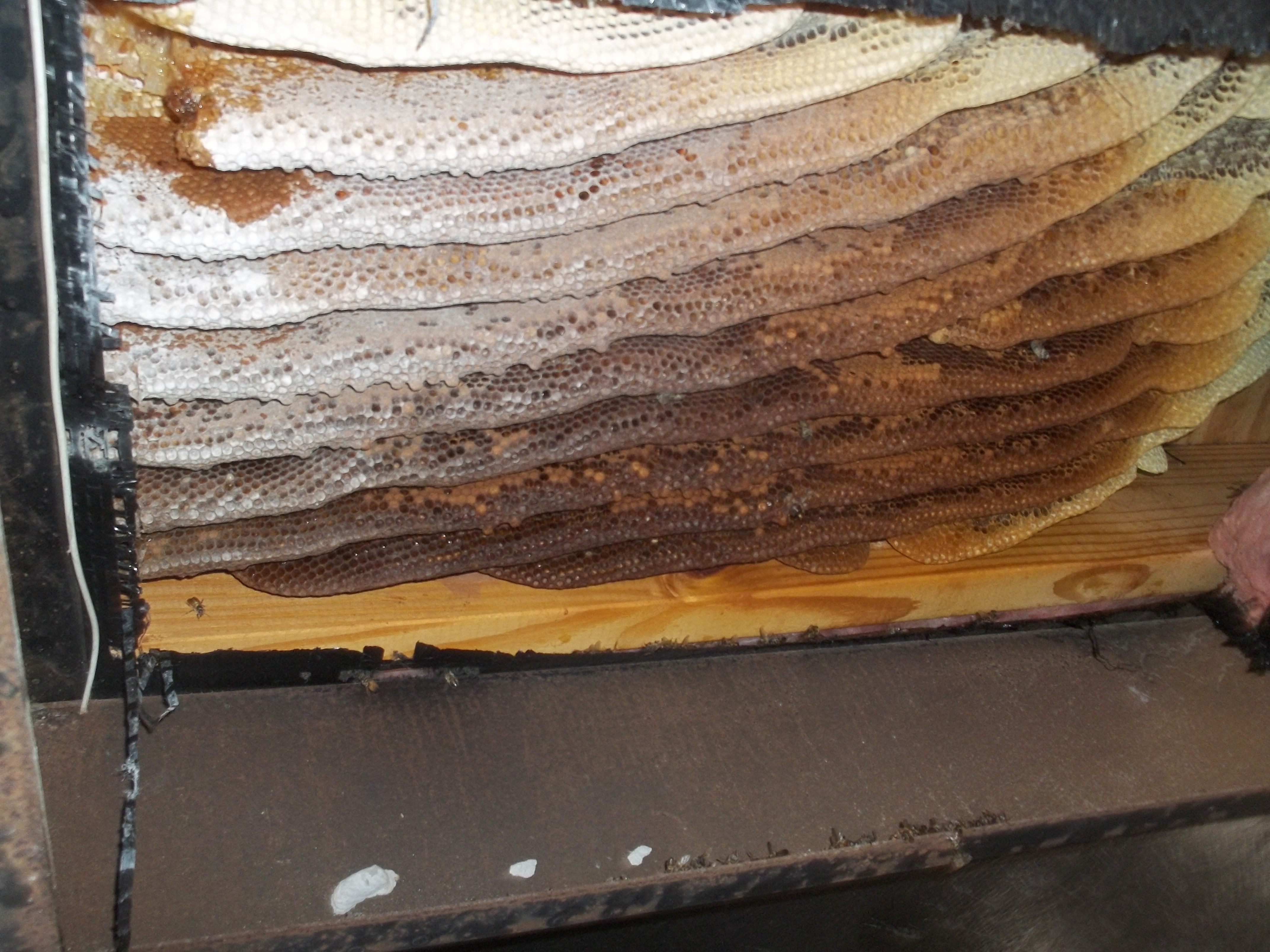 Bee Hive Removal Followup From A Trailer In Orlando