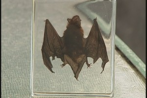 Bats In Ellenton Home