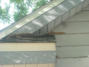 squirrels damage fascia